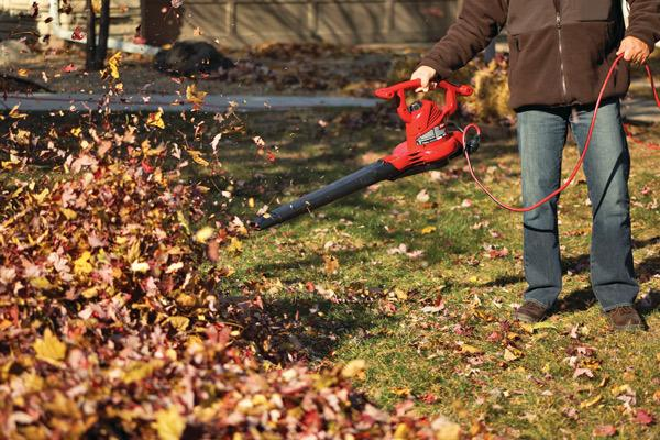 Best Spring And Fall Yard Cleanup