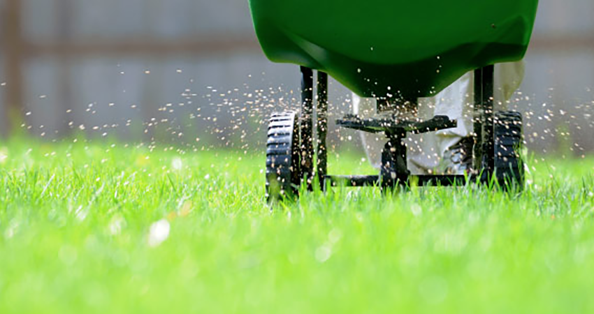 Grass-Fertilization-weed-control-kelowna